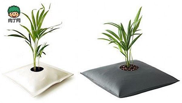 Creative house plant containers