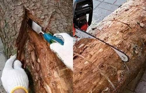 How To Make Beautiful Log Garden Planter Icreativeideas Com