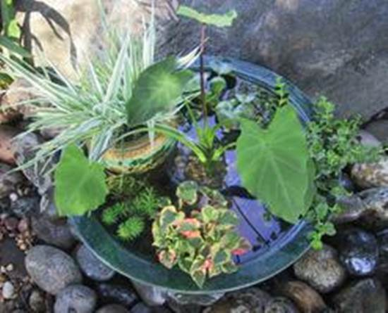 How to DIY Mini Garden Pond in a Container 1