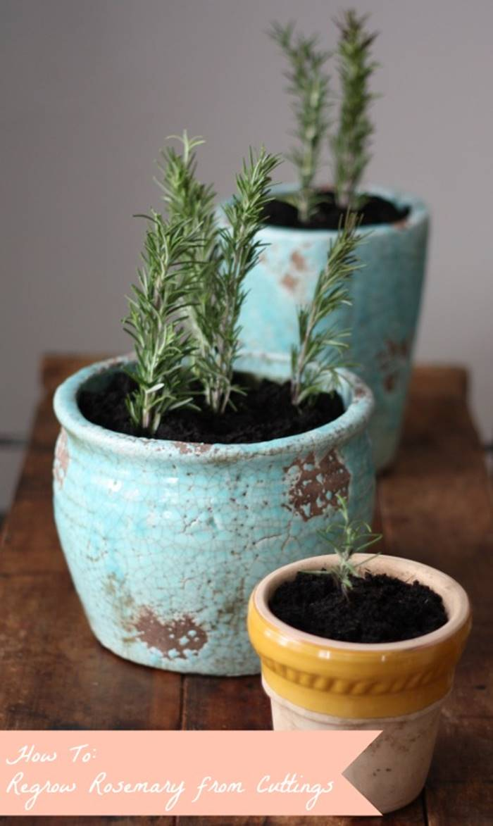 13 Vegetables That You Can Regrow Again And Again --> Rosemary