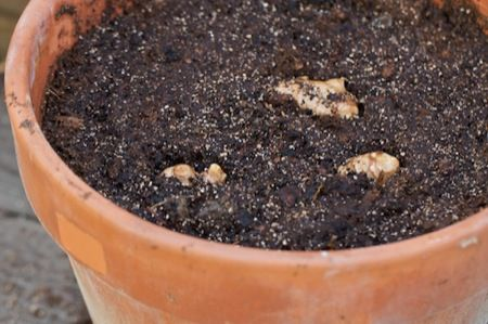 13 Vegetables That You Can Regrow Again And Again --> Ginger