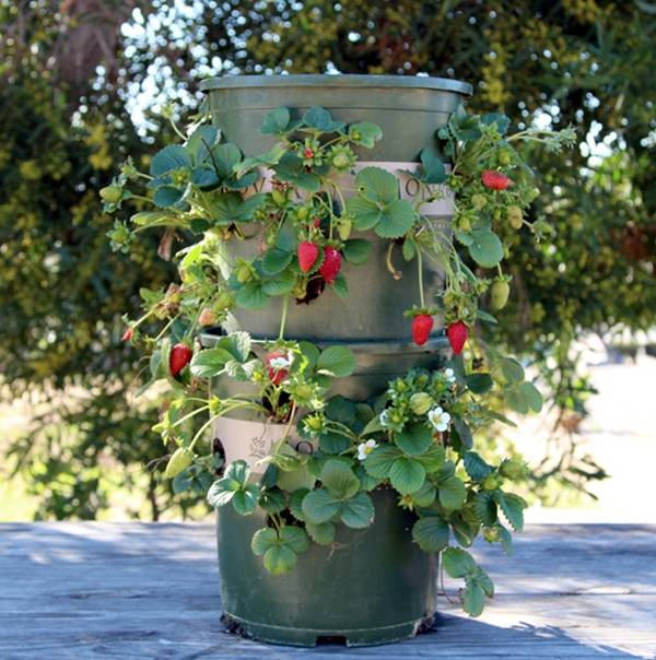 Creative Ideas - DIY Strawberry Tower With Reservoir 2