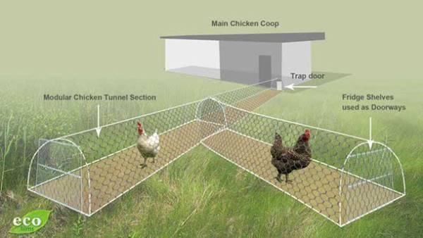 Creative Ideas - DIY Backyard Chicken Tunnel