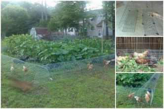 creative-ideas-diy-backyard-chicken-tunnel
