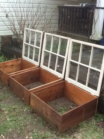 Easy Cold Frames from Old Windows