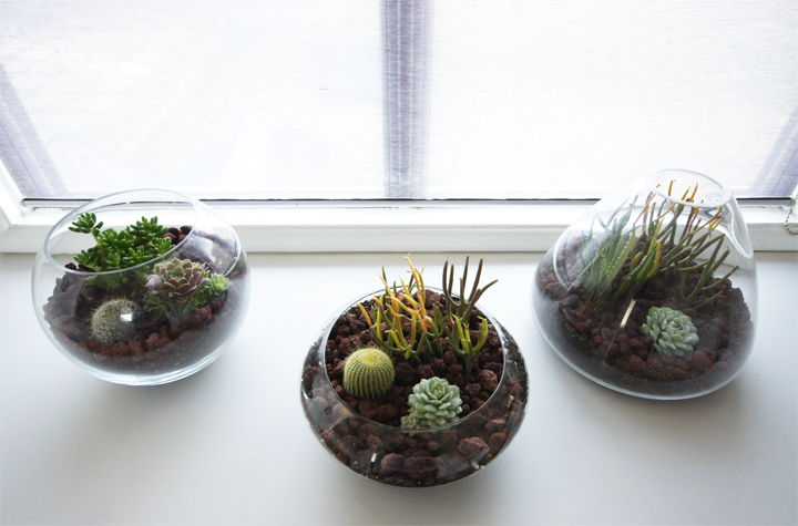 DIY Simple Terrarium
