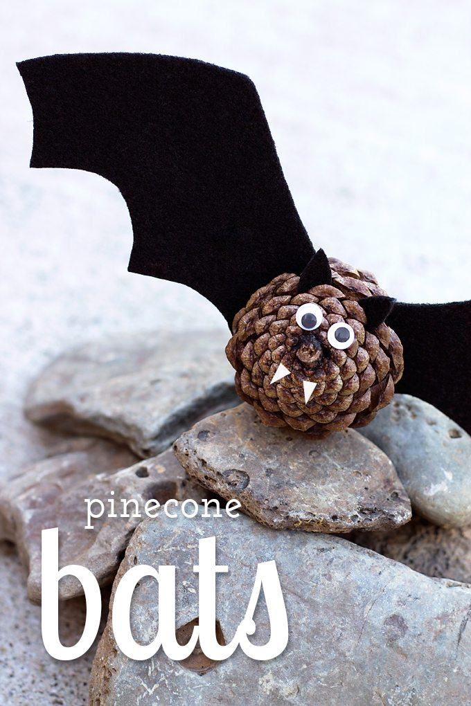East Pinecone Bats