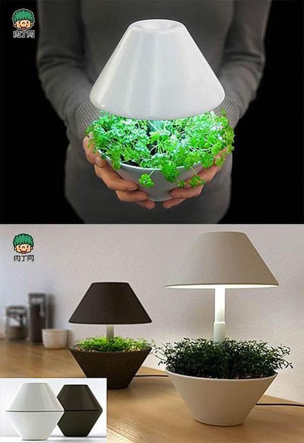 Creative Plant Pot Ideas