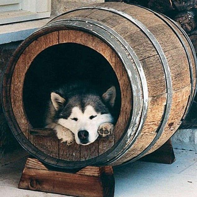36+ Creative DIY Ideas to Upcycle Old Wine Barrels --> Wine Barrel Dog House