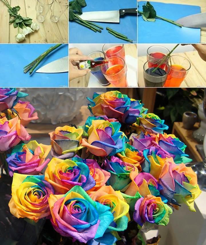 DIY Real Rainbow Roses 1