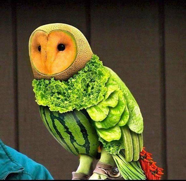Melon and Vegetable Owl