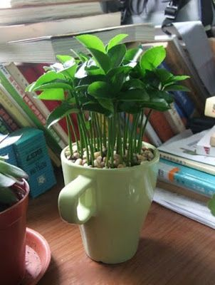 How-to-Grow-a-Lemon-Tree-from-Seed-in-a-Pot-Indoors-9.jpg