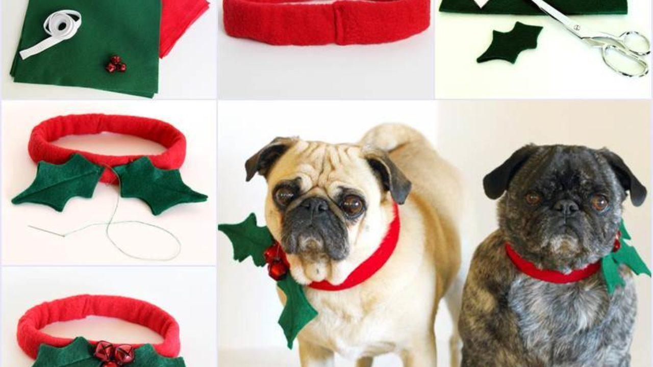 Creative Ideas Diy Christmas Dog Collar