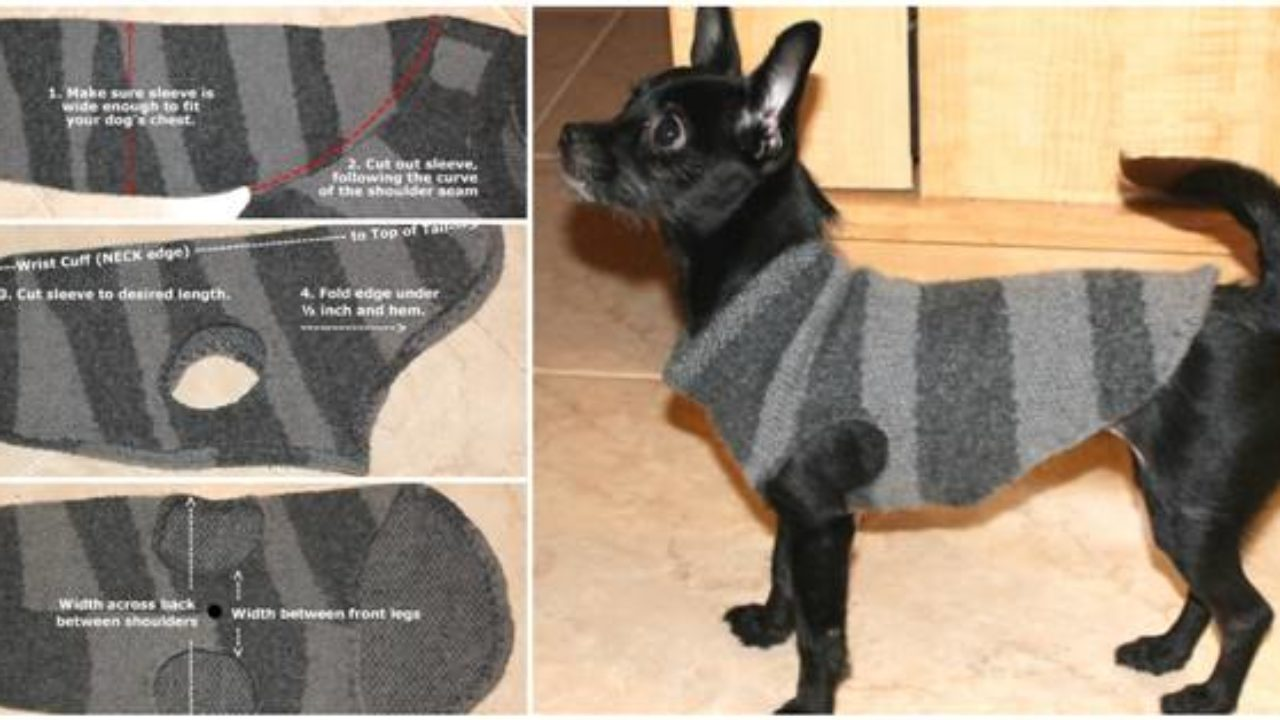 Creative Ideas Diy Dog Sweater From Old Sweater Sleeve