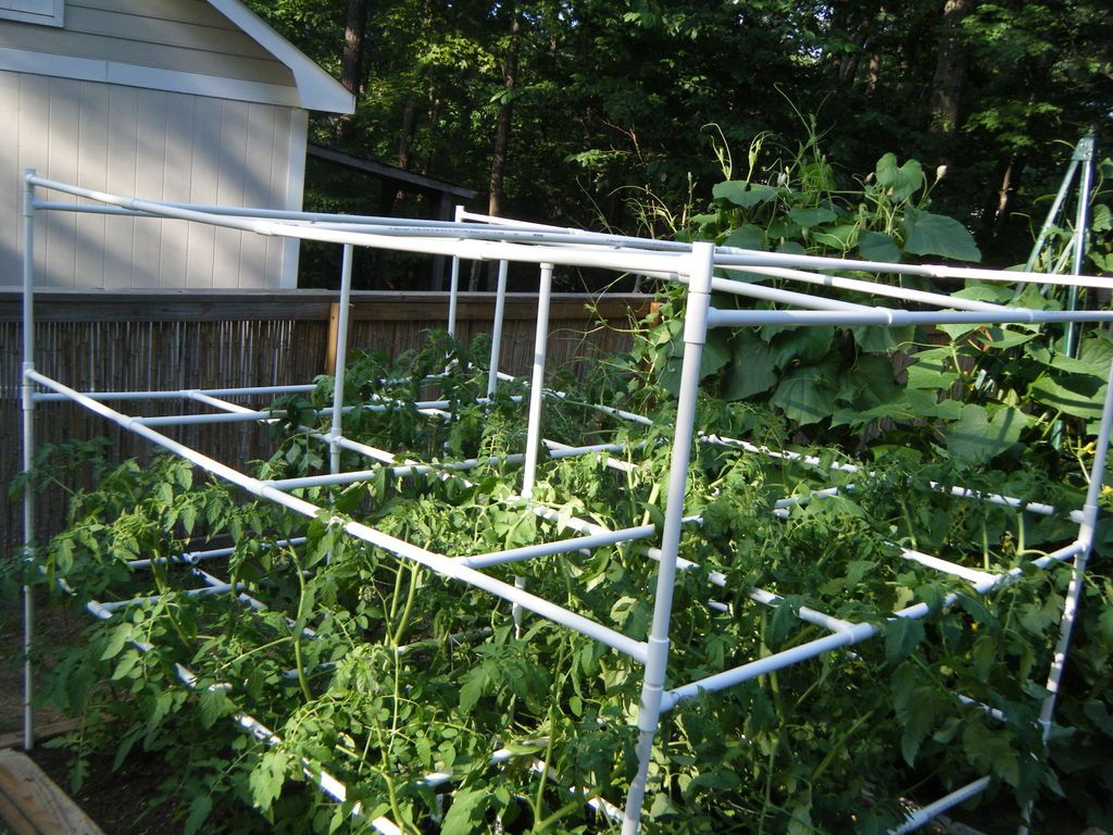 30+ Creative Uses of PVC Pipes in Your Home and Garden --> PVC Tomato Cages
