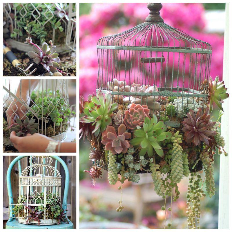 Creative Ideas - DIY Bird Cage Succulent Planter