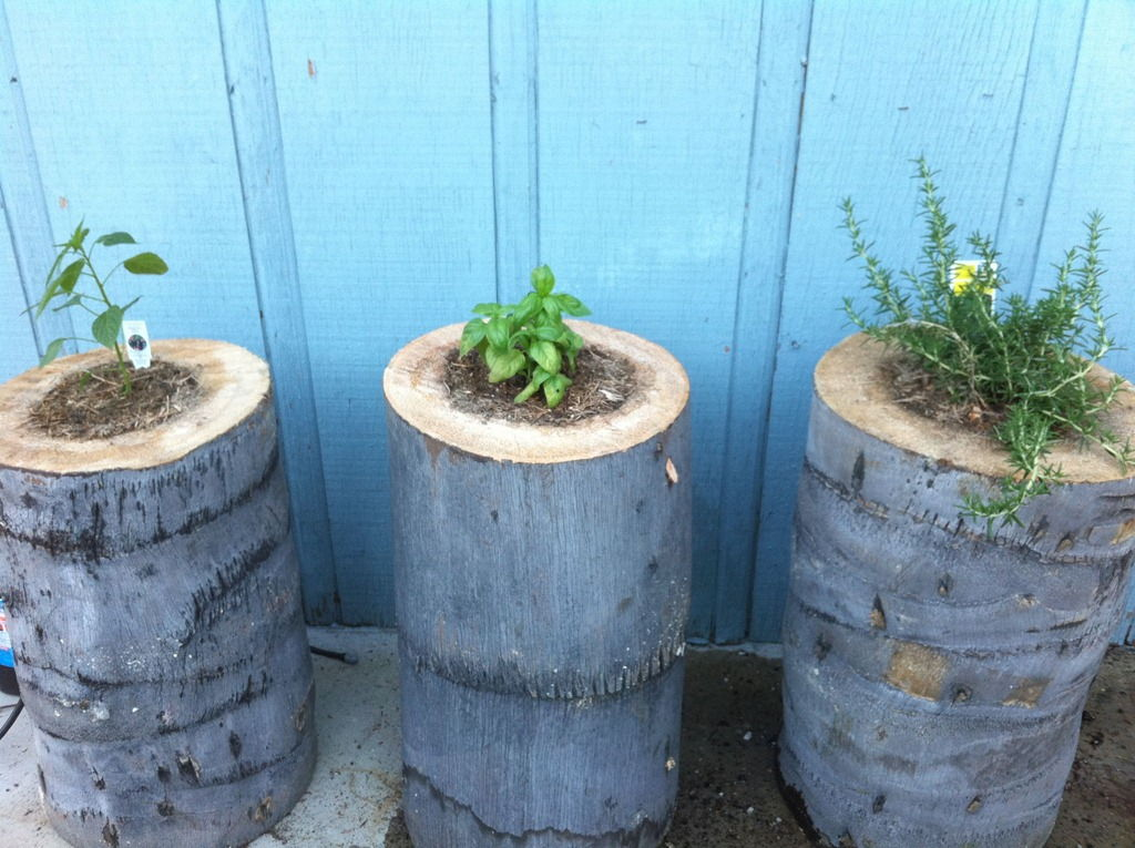 40+ Creative DIY Garden Containers and Planters from Recycled Materials --> Tree Stump Planters
