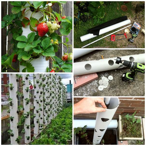 40+ Creative DIY Garden Containers and Planters from Recycled Materials --> DIY Strawberry Tower from PVC Pipe