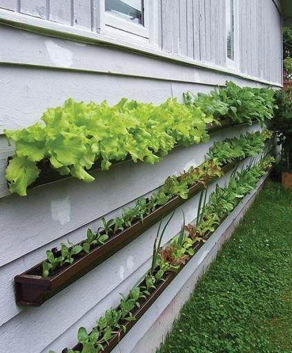 20+ Creative DIY Vertical Gardens For Your Home --> DIY Rain Gutter Vertical Vegetable Garden