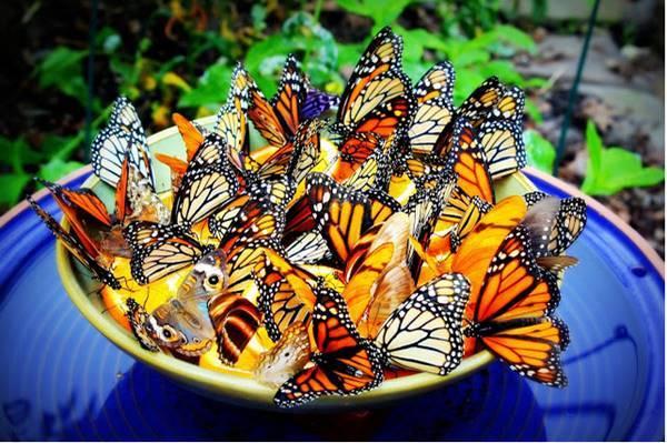 Creative Ideas - DIY Amazing Butterfly Feeder 1