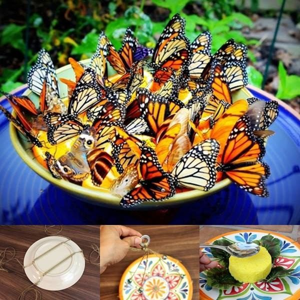 Creative Ideas - DIY Amazing Butterfly Feeder