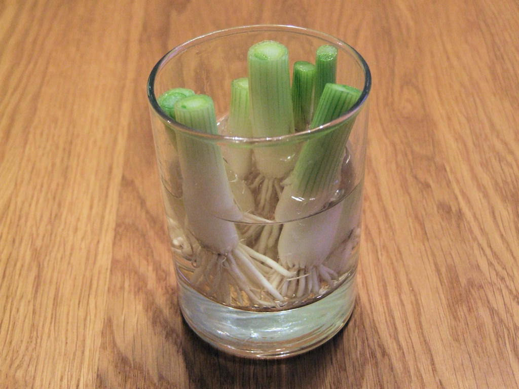 13 Vegetables That You Can Regrow Again And Again --> Green Onion