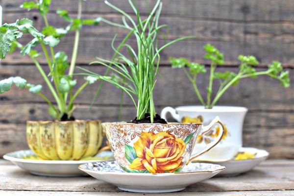 35+ Creative DIY Herb Garden Ideas --> DIY Herb Garden In A Teacup