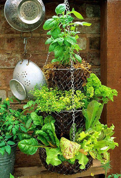 35+ Creative DIY Herb Garden Ideas --> Hanging Basket Herb Garden