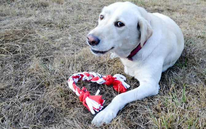 40+ Creative Ideas to Repurpose and Reuse Your Old T-shirts --> DIY T-Shirt Dog Toy