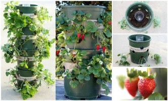 Strawberry Garden Ideas what a great way to grow strawberries Creative Ideas Diy Strawberry Tower With Reservoir