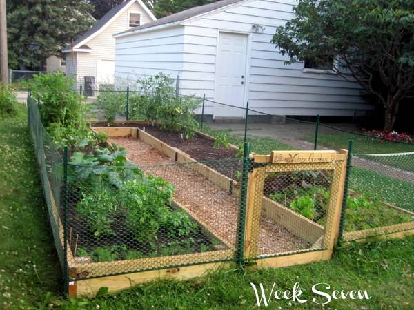 30+ Creative DIY Raised Garden Bed Ideas And Projects --> U-shaped Raised Vegetable Bed with Fence