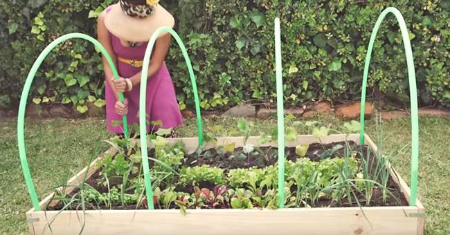 Creative Ideas - DIY Easy Greenhouse