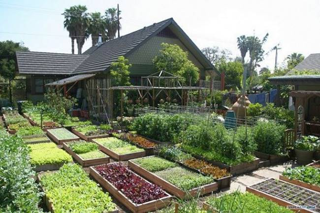 Learn How To Grow Over 6000 Pounds of Food Per Year on Just 1/10th Acre of Land