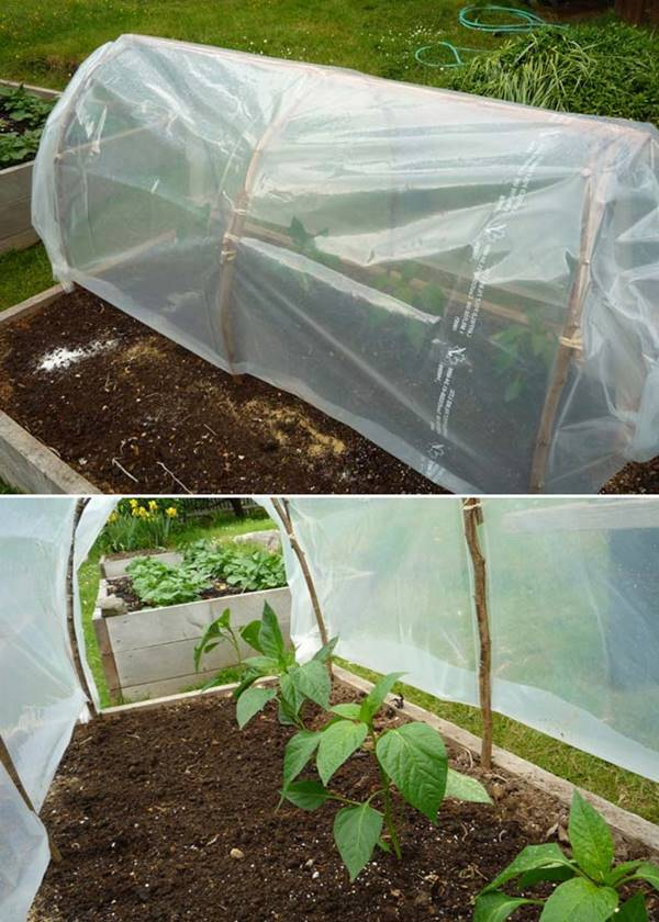 How to Make an Instant Cloche to Protect Seedlings