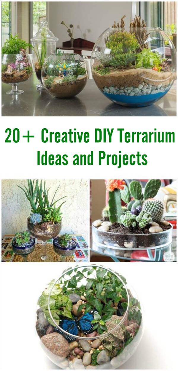 20+ Creative DIY Terrarium Ideas and Projects