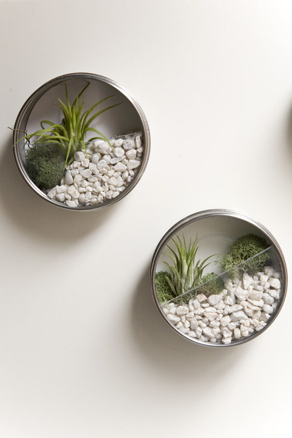 DIY Wall Terrarium Garden Favors