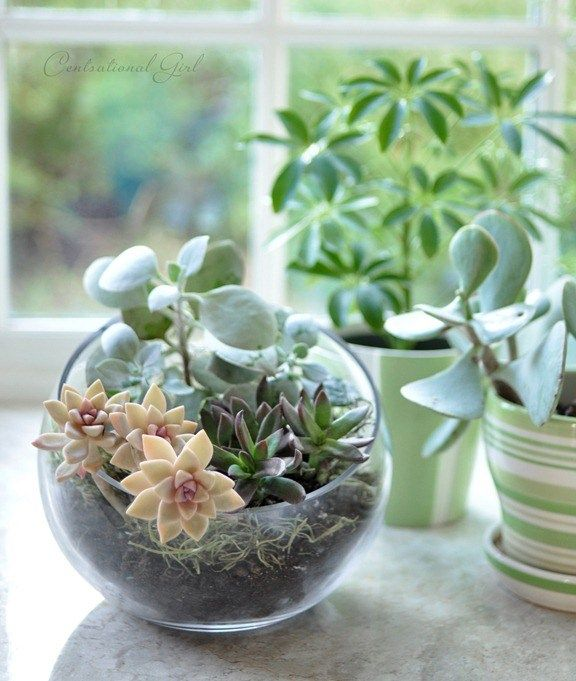 DIY Terrariums Around the House