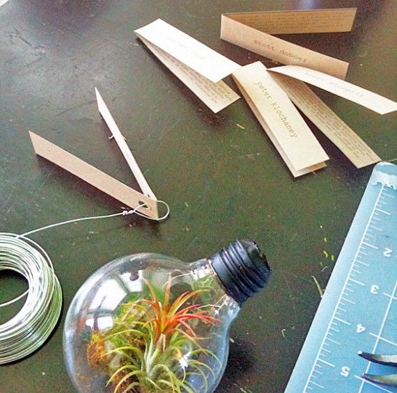 DIY Light Bulb Terrarium
