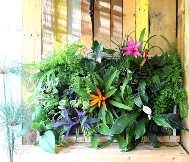 25 Amazing DIY Projects to Repurpose Pallets into Garden Planters --> DIY Tropical Pallet Living Wall